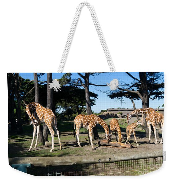 Giraffe Dsc2872 Weekender Tote Bag