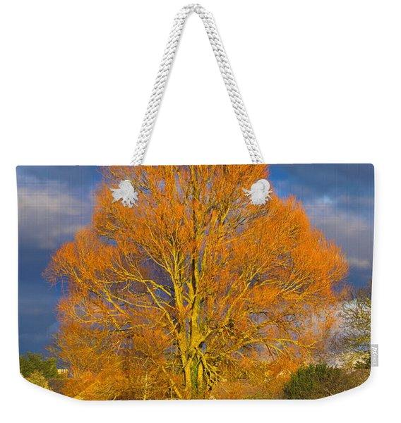 Golden Glow - Sunlit Tree Weekender Tote Bag
