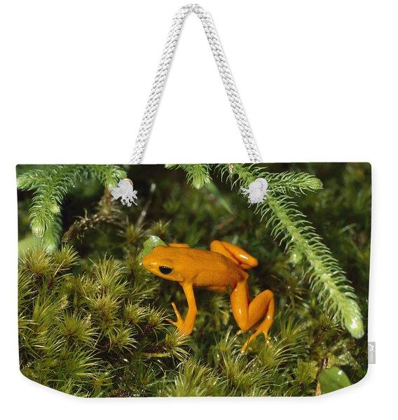 Golden Mantella Frog In Underbrush Weekender Tote Bag