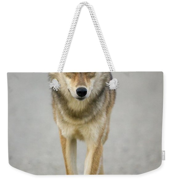 Gray Wolf Denali National Park Alaska Weekender Tote Bag