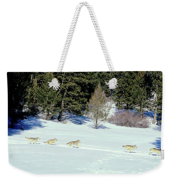 Gray Wolves Canis Lupus Running Weekender Tote Bag