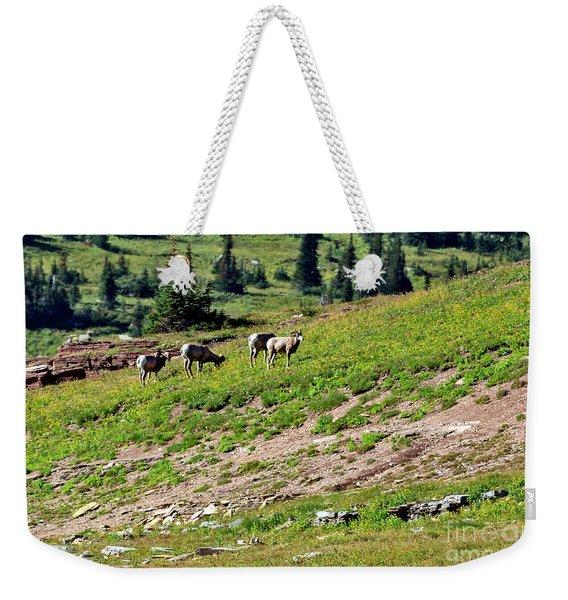 Grazing Big Horn Sheep Weekender Tote Bag