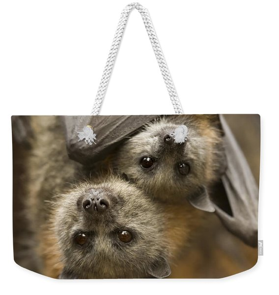 Hang In There Weekender Tote Bag