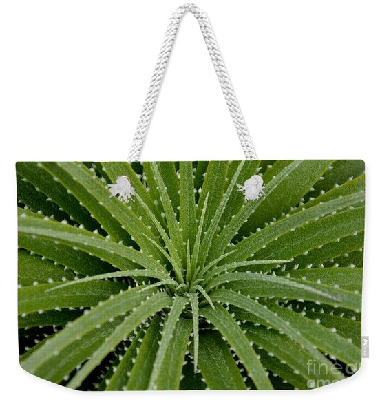 Weekender Tote Bag featuring the photograph Hechtia Argentea by Scott Lyons