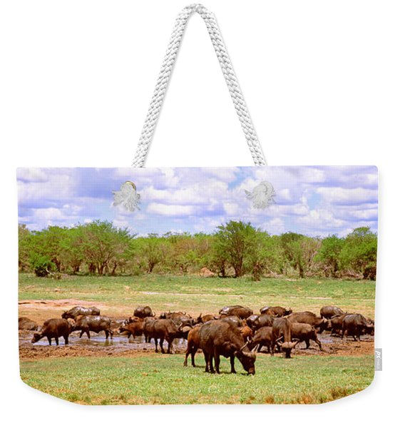 Herd Of Cape Buffaloes Syncerus Caffer Weekender Tote Bag