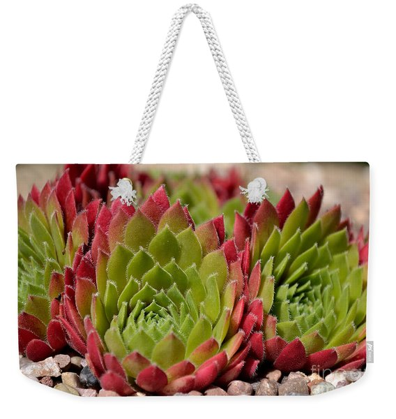 Weekender Tote Bag featuring the photograph Houseleeks Aka Sempervivum From The Side by Scott Lyons