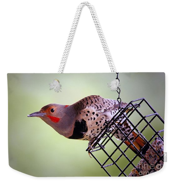 Intergrade Red Shafted And Yellow Shafted Northern Flicker Male Weekender Tote Bag