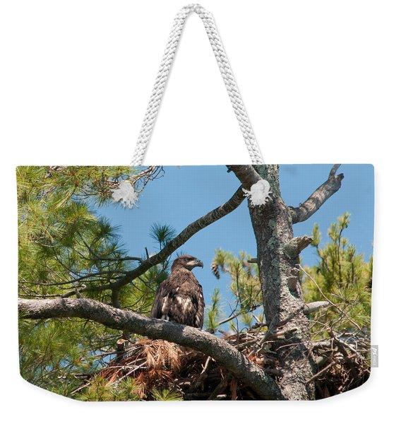 Immature Bald Eagle Weekender Tote Bag
