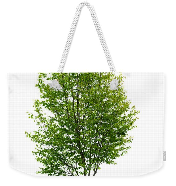 Isolated Young Tree Weekender Tote Bag