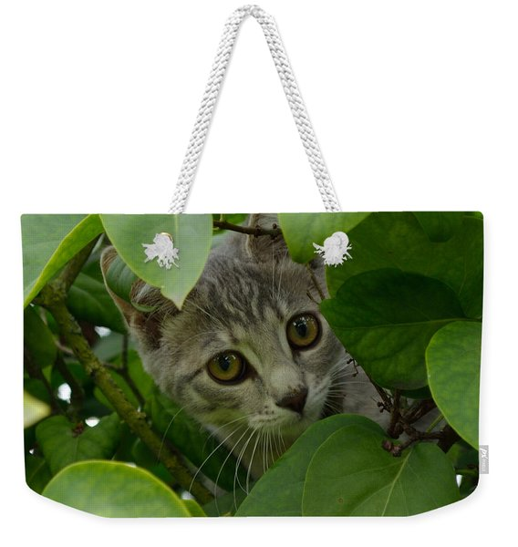 Weekender Tote Bag featuring the photograph Kitten In The Bushes by Scott Lyons