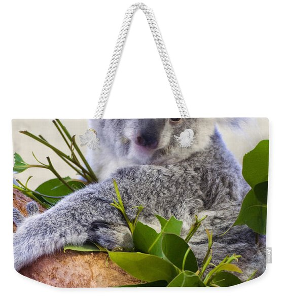 Koala On Top Of A Tree Weekender Tote Bag