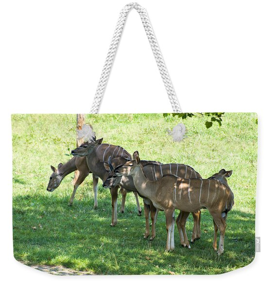 Kudu Antelope In A Straight Line Weekender Tote Bag
