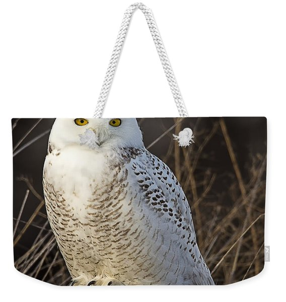Late Season Snowy Owl Weekender Tote Bag