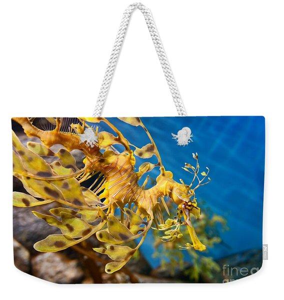 Leafy Sea Dragon Phycodurus Eques. Weekender Tote Bag