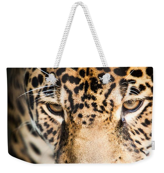 Weekender Tote Bag featuring the photograph Leopard Resting by John Wadleigh