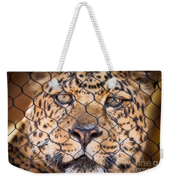 Weekender Tote Bag featuring the photograph Let Me Out by John Wadleigh