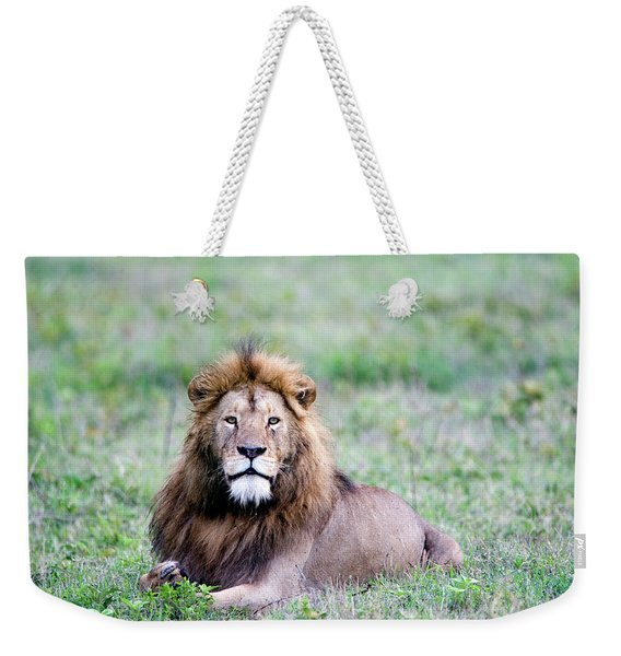 Lion Panthera Leo Relaxing In A Field Weekender Tote Bag