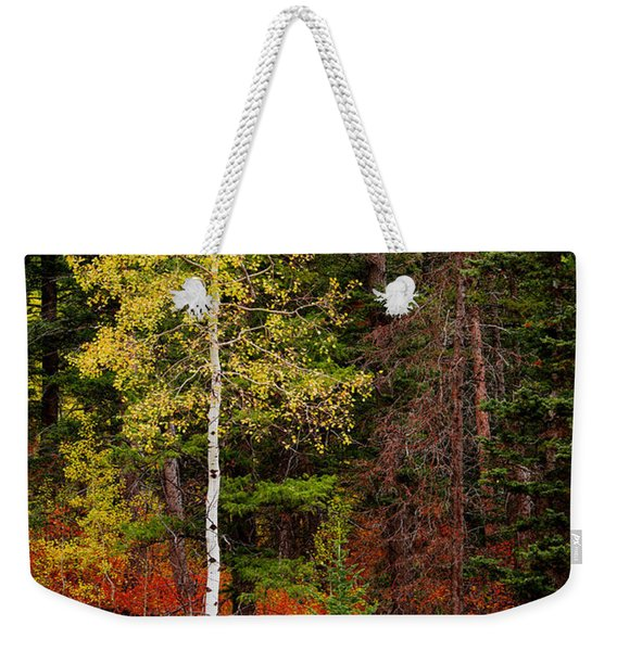 Lone Aspen In Fall Weekender Tote Bag