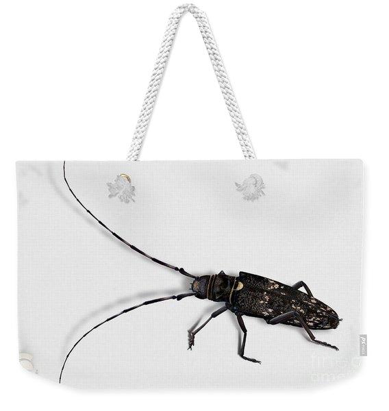 Long-hornded Wood Boring Beetle Monochamus Sartor - Coleoptere Monochame Tailleur - Weekender Tote Bag