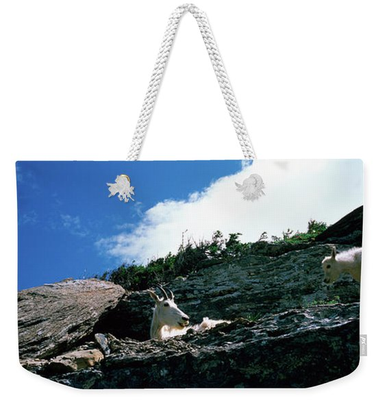 Low Angle View Of Two Mountain Goats Weekender Tote Bag