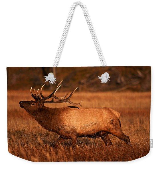 Madison Bull Weekender Tote Bag