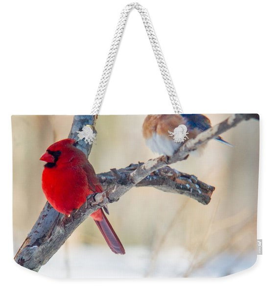 Male Bluebird And Cardinal On Branch Weekender Tote Bag