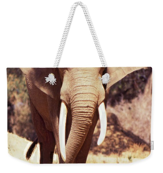 Weekender Tote Bag featuring the photograph Mana Pools Elephant by Jeremy Hayden