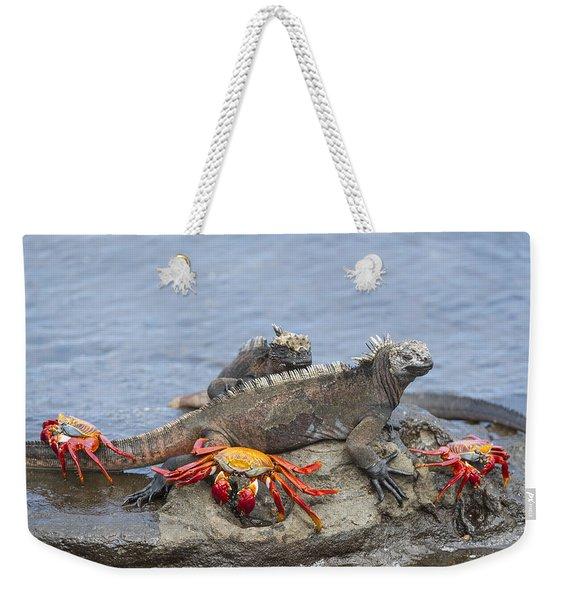 Marine Iguana Pair And Sally Lightfoot Weekender Tote Bag