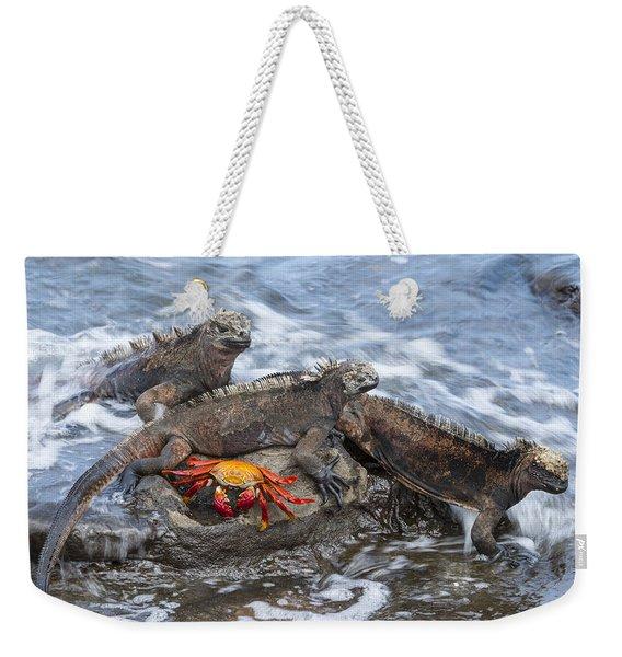 Marine Iguana Trio And Sally Lightfoot Weekender Tote Bag