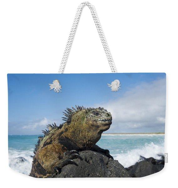 Marine Iguana Turtle Bay Santa Cruz Weekender Tote Bag