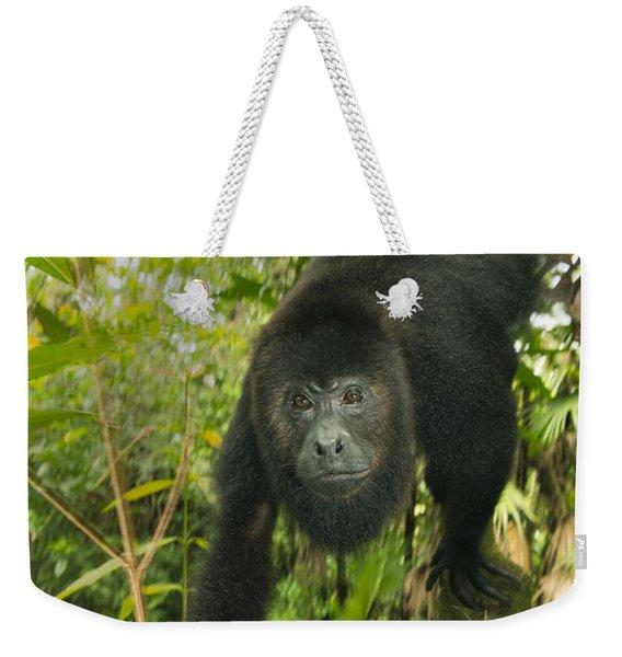 Mexican Black Howler Monkey Belize Weekender Tote Bag