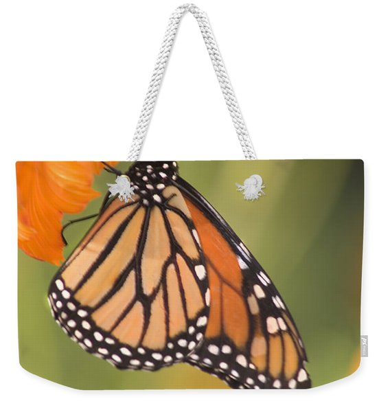 Weekender Tote Bag featuring the photograph Monarch Butterfly by Richard J Thompson