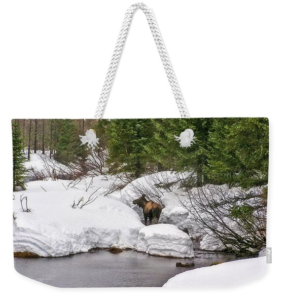 Moose In Alaska Weekender Tote Bag