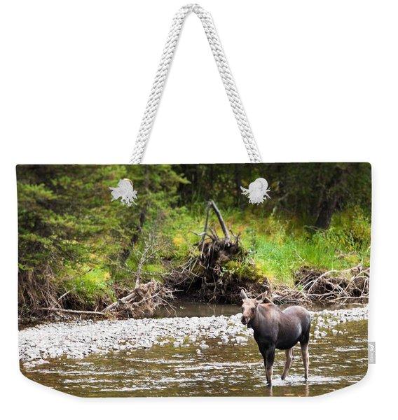 Moose In Yellowstone National Park   Weekender Tote Bag