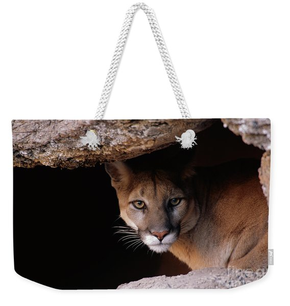Mountain Lion Peering From Cave Weekender Tote Bag