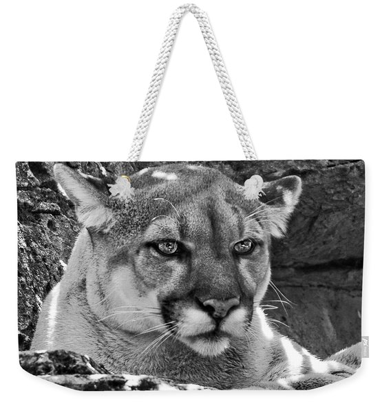 Mountain Lion Bergen County Zoo Weekender Tote Bag