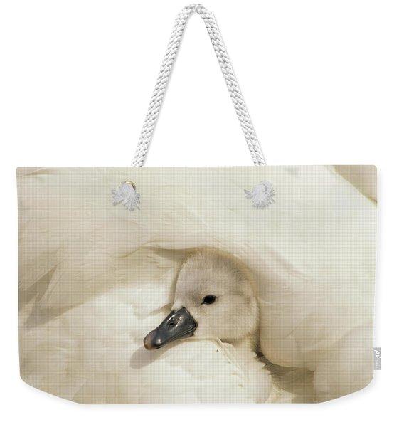 Mute Swan Cygnus Olor Cygnet Weekender Tote Bag