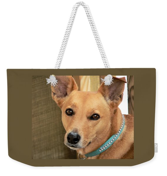 Dog - Cookie One Weekender Tote Bag