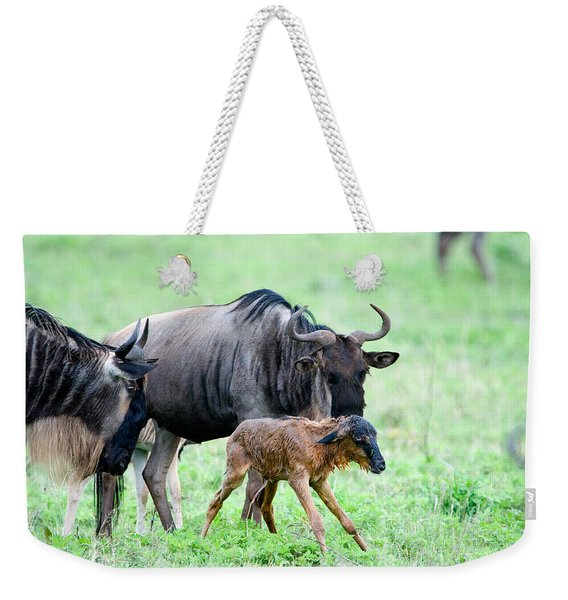 Newborn Wildebeest Calf Weekender Tote Bag