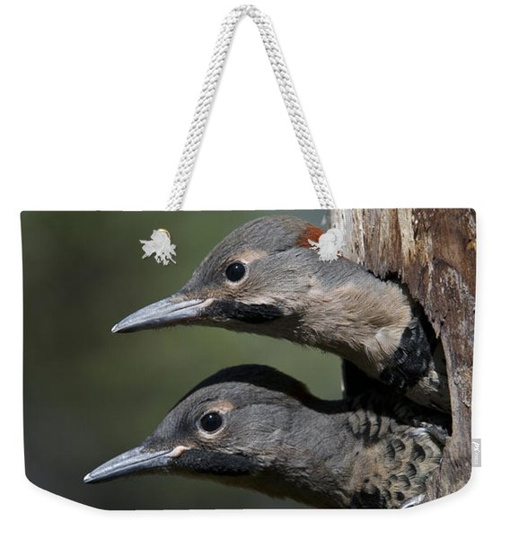 Northern Flicker Chicks In Nest Cavity Weekender Tote Bag