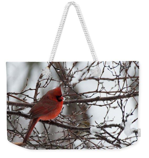 Northern Red Cardinal In Winter Weekender Tote Bag