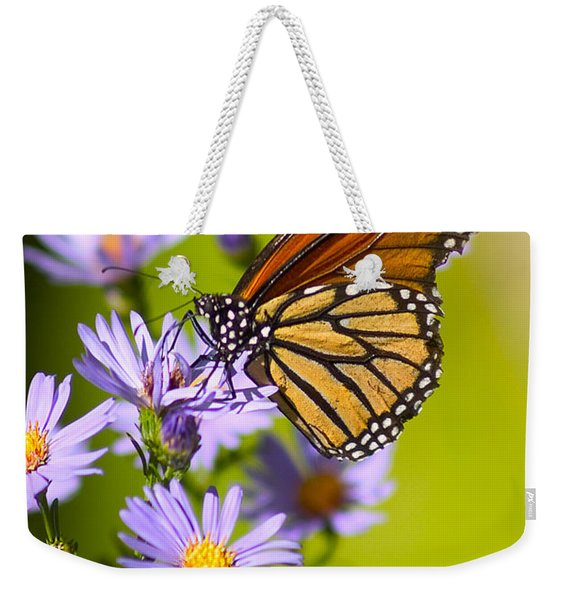 Weekender Tote Bag featuring the photograph Old Butterfly On Aster Flower by Richard J Thompson