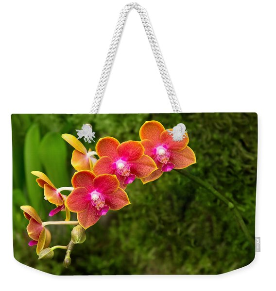 Orchid - Phalaenopsis - Tying Shin Cupid Weekender Tote Bag