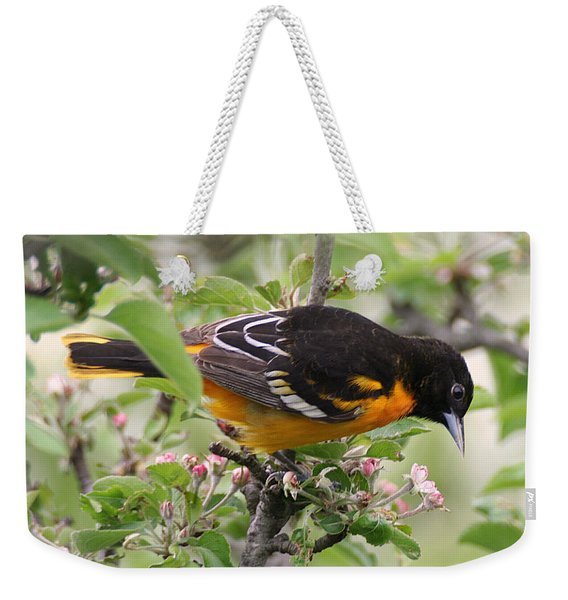 Weekender Tote Bag featuring the photograph Oriole With Apple Blossoms by William Selander