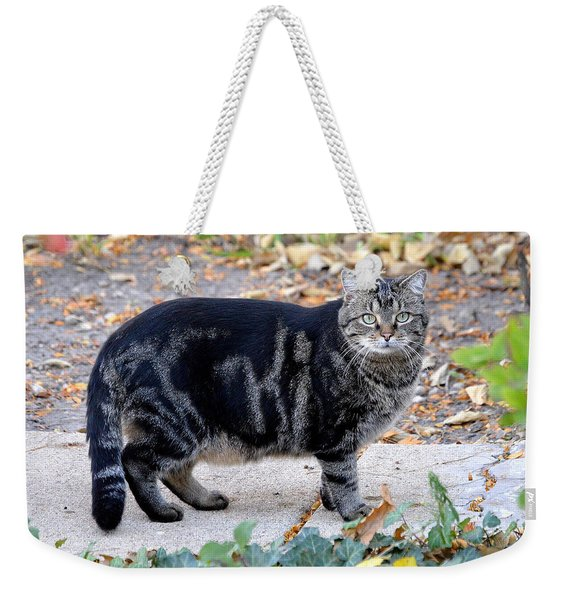 Our Neighbor The Cat Weekender Tote Bag
