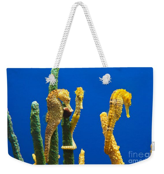 Pacific Seahorses Hippocampus Ingens Are Among The Giants Of Their World Weekender Tote Bag