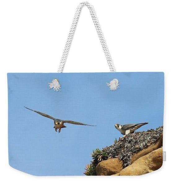 Peregrine Falcons - 1 Weekender Tote Bag