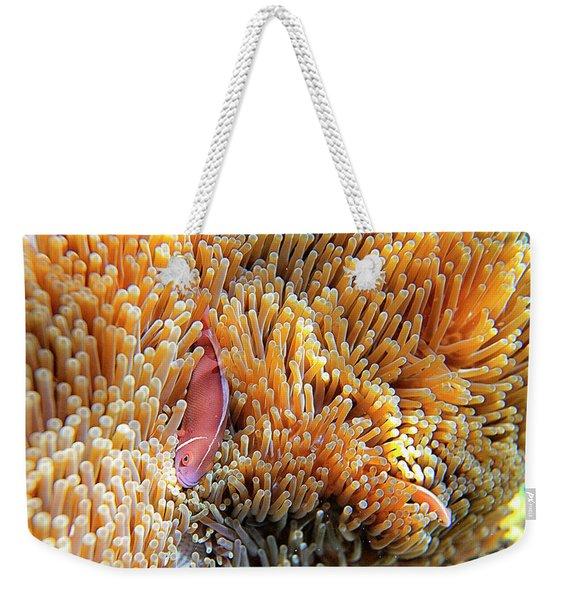 Pink Anemonefish, Chumphon Pinnacle, Ko Weekender Tote Bag