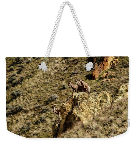 Posing Bighorn Sheep Weekender Tote Bag
