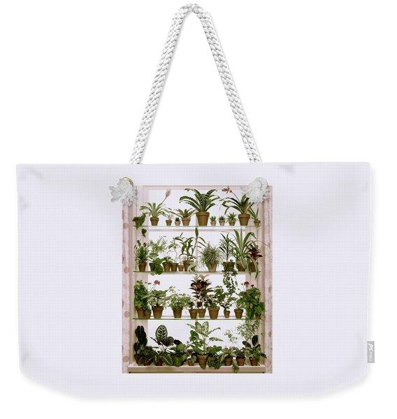 Potted Plants On Shelves Weekender Tote Bag